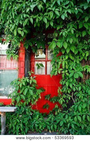 Red Door And Green Vine