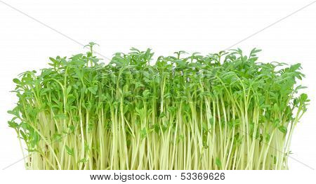 Watercress leaves