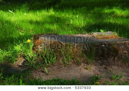 Great Stump