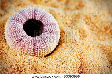 Sea Urchin Shell On Sand