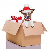 stock photo of jack-in-the-box  - winter christmas mail dog in a very big moving box with a big present - JPG