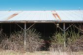 pic of feedlot  - abandoned beef loafing barn - JPG