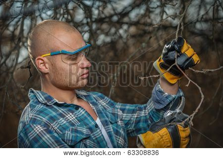 Portrait of young gardener pruning brunches with the pruner