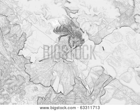 Pencil sketch photograph of bee on flowers