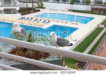 Seagulls sitting in front of the balcony