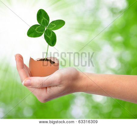 Hand holding clover growing out of the egg .New life concept.