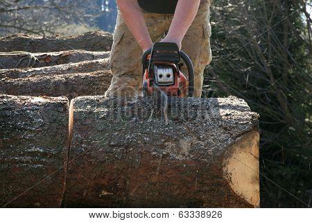 Cuts tree