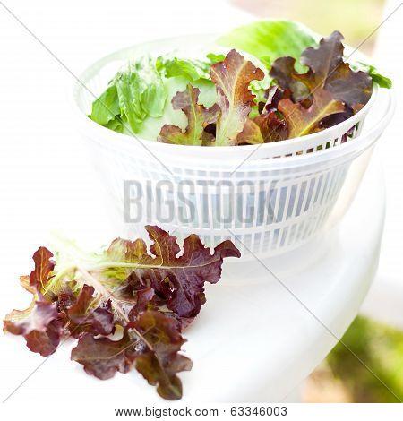 Lettuce Salad In Spinner