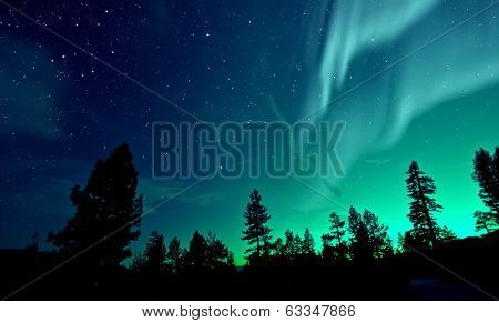 Northern Lights Aurora Borealis over trees