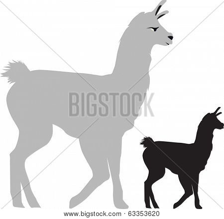 walking llama on a white background