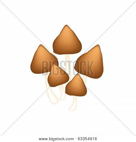 A Group Of Termite Mushroom On White Background