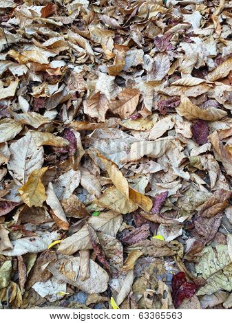 The Dry Leave Background