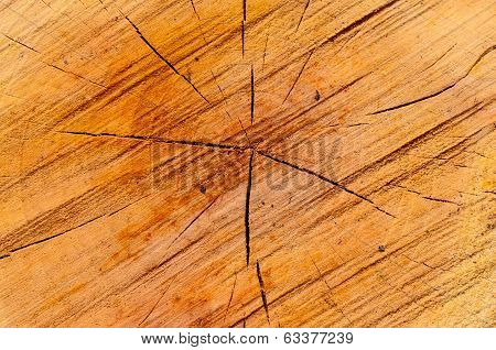 Closeup Of Wooden Cut Texture - Stock Photo