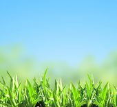 Green grass on blue sky