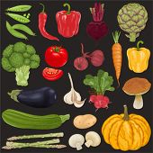 foto of potato-field  - Big vector collection of vegetables - JPG