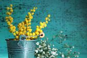stock photo of mimosa  - Twigs of mimosa flowers in pail on blue wooden background - JPG
