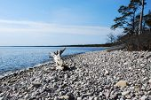 stock photo of driftwood  - Driftwood at a stony bay - JPG