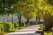 stock photo of grass area  - area of the old city park with lantern near bench under japanese cherry tree in sun light - JPG