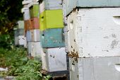 image of beehive  - bees and a collection of beehives or apiary - JPG