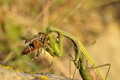 pic of mandible  - Insect outdoor  - JPG