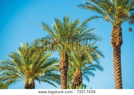 Palm Trees Oasis