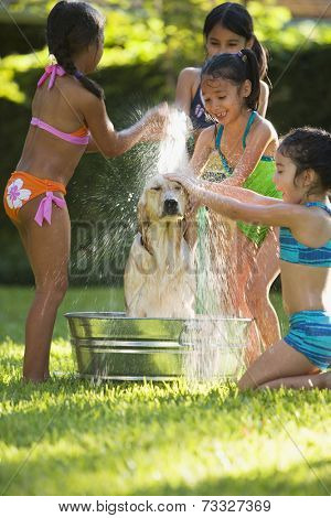 Group of Hispanic girls washing dog