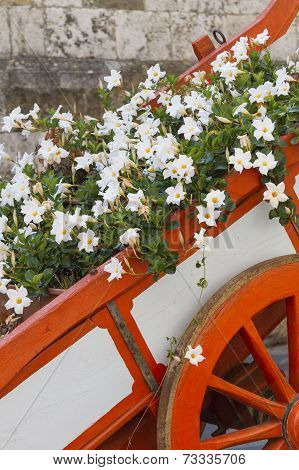 flowers on the bandwagon in the garden