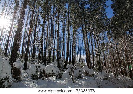 Sunny Winter Wonderland