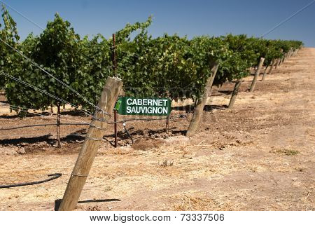 Wine Sign At California Vineyard