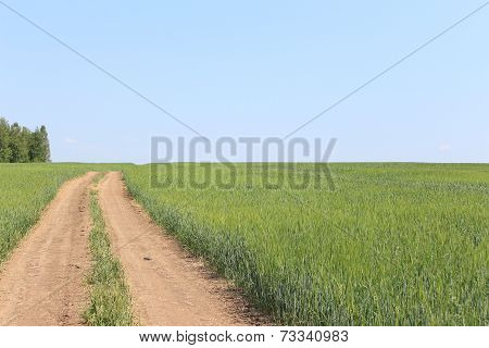 Rural road in field