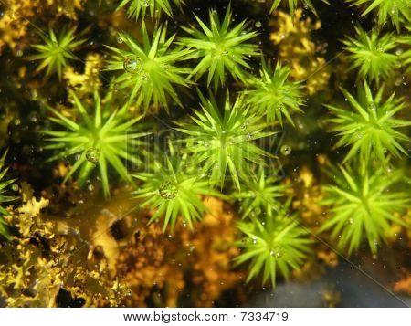 Moss Under Water