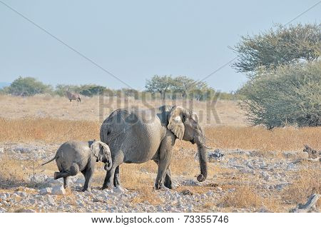 Itching Elephant Calf At Okaukeujo