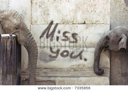 Elephants' Love