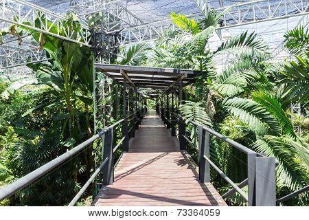 The Wooden Bridge In The Indoor Park