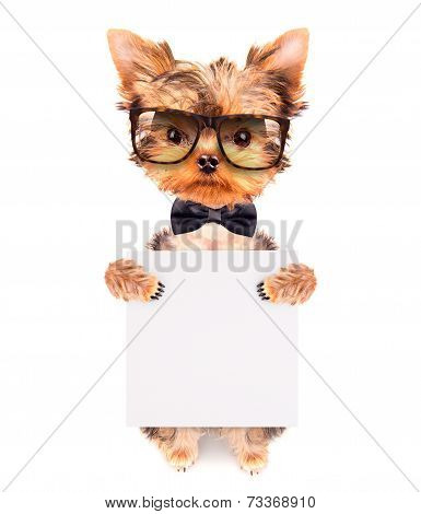 dog wearing a neck bow and shades with banner