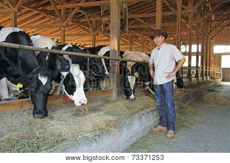 Farmer and cows in cowshed