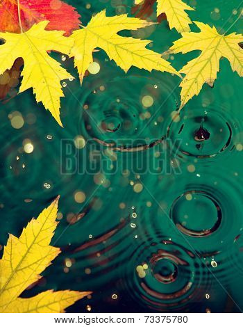 Abstract Autumn Background With Maple Yellow Leaves