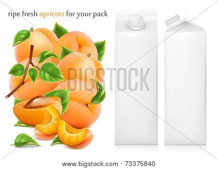 Fresh ripe apricots with green leaves and water drops. Juice white carton package. Vector illustration