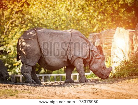 Rhinoceros on a warm autumn day