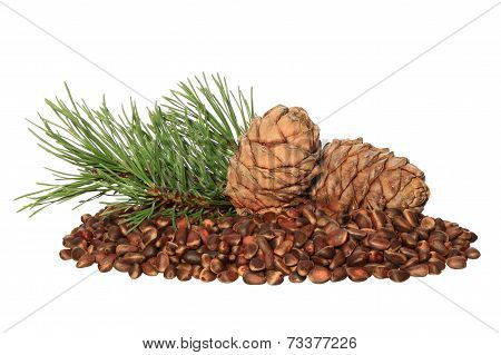 Cedar Nuts And  Cones Isolated On White Background