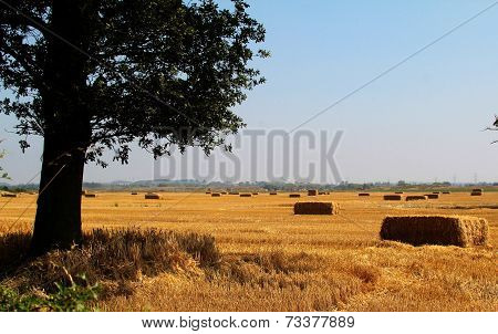 Tree with hay bales