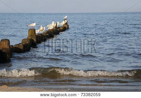 birds at the sea
