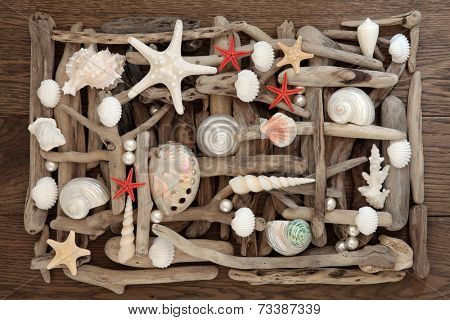 Sea shell and driftwood abstract collage on oak wood background.