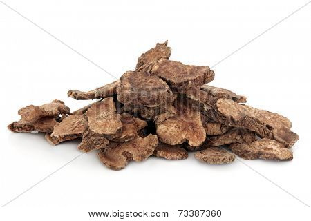 Atractylodes tuber used in chinese herbal medicine over white background. Cang zhu.