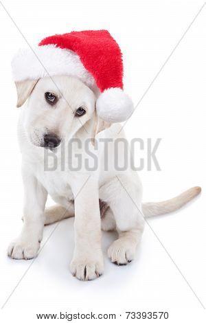 Christmas Labrador puppy dog wearing Santa hat