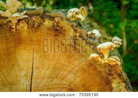 Fungi on a sawn forest log