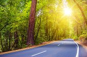 foto of paved road  - Scenic Sunny Forest Road - JPG