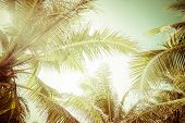 stock photo of sunny beach  - Abstract summer background in vintage style with tropical palm tree leaves at sunny day - JPG