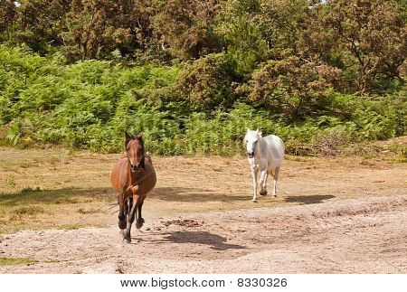 Forest Ponies