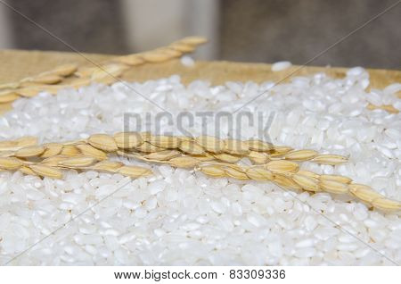 Rice plants and white rice on wooden table
